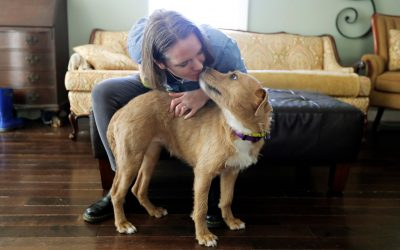 Foster Pets for Companionship